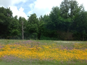 Mothers Day wildflowers