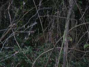 Magnolia Trail 5_22_13 008