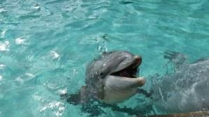 Sea World June 2013 034