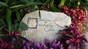 March 2016 Discovery Cove 006